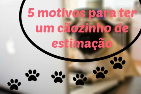 5 motivos para ter um cãozinho de estimação