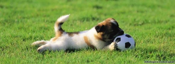 capa-cachorro-brincando