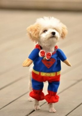 roupa-de-cachorro-fantasia-superman-frete-gratis_MLB-O-4135241763_042013