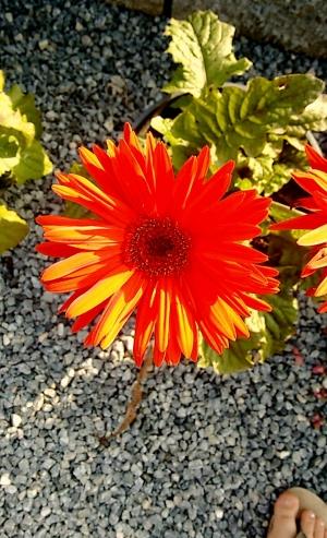 Flor #5